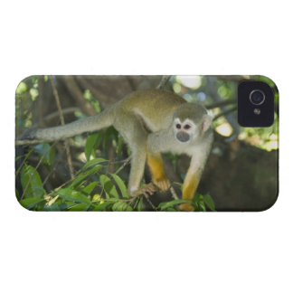 Common Squirrel Monkey, (Saimiri sciureus), Rio iPhone 4 Case