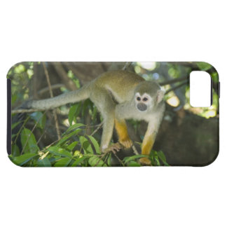 Common Squirrel Monkey, (Saimiri sciureus), Rio iPhone SE/5/5s Case