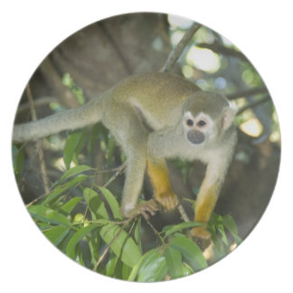 Common Squirrel Monkey, (Saimiri sciureus), Rio Melamine Plate