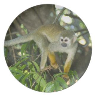 Common Squirrel Monkey, (Saimiri sciureus), Rio Melamine Plate
