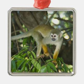 Common Squirrel Monkey, (Saimiri sciureus), Rio Metal Ornament