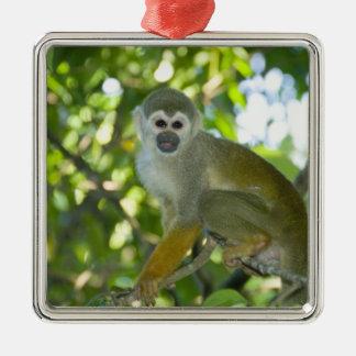 Common Squirrel Monkey (Saimiri sciureus) Rio Metal Ornament
