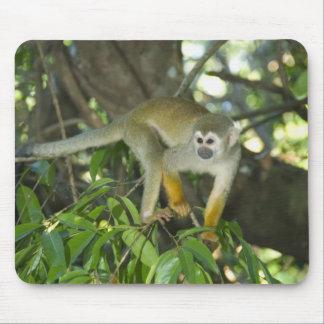 Common Squirrel Monkey, (Saimiri sciureus), Rio Mousepad