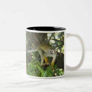 Common Squirrel Monkey, (Saimiri sciureus), Rio Mug