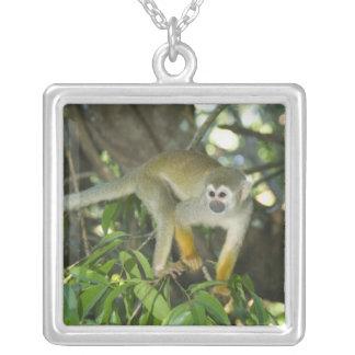 Common Squirrel Monkey, (Saimiri sciureus), Rio Necklace