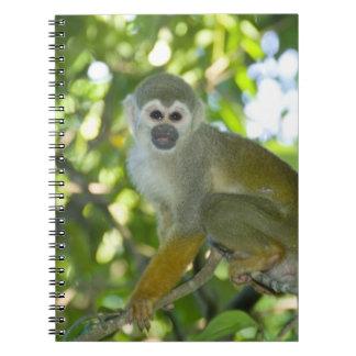 Common Squirrel Monkey (Saimiri sciureus) Rio Notebook