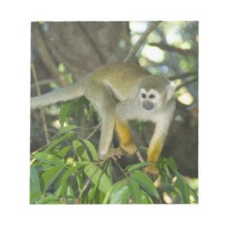 Common Squirrel Monkey, (Saimiri sciureus), Rio Notepads
