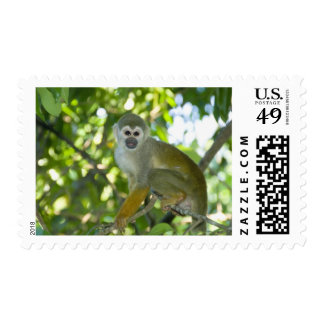 Common Squirrel Monkey Saimiri sciureus Rio Postage Stamp