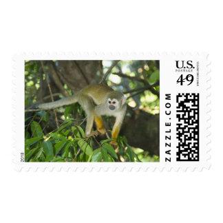 Common Squirrel Monkey, (Saimiri sciureus), Rio Stamp