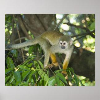 Common Squirrel Monkey, (Saimiri sciureus), Rio Poster