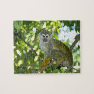 Common Squirrel Monkey (Saimiri sciureus) Rio Puzzles