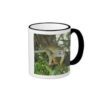Common Squirrel Monkey, (Saimiri sciureus), Rio Ringer Mug