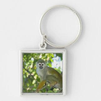 Common Squirrel Monkey (Saimiri sciureus) Rio Silver-Colored Square Keychain