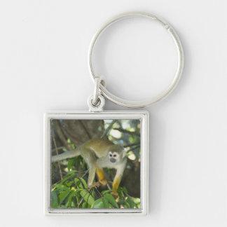 Common Squirrel Monkey, (Saimiri sciureus), Rio Silver-Colored Square Keychain