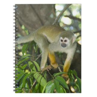 Common Squirrel Monkey, (Saimiri sciureus), Rio Spiral Notebook