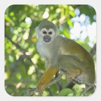 Common Squirrel Monkey (Saimiri sciureus) Rio Square Sticker
