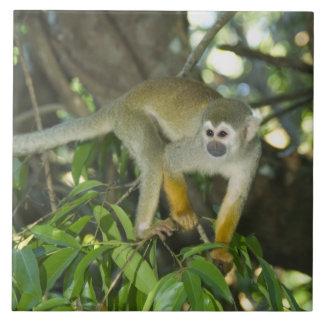Common Squirrel Monkey, (Saimiri sciureus), Rio Ceramic Tile