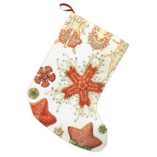 Common Starfish Drawings Small Christmas Stocking