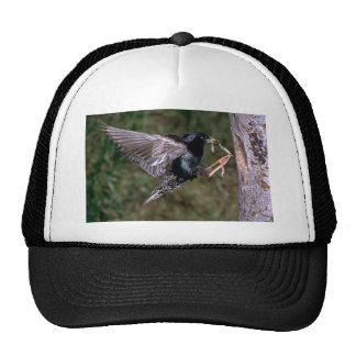 Common Starling with worm Trucker Hat