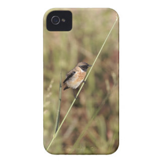 Common Stonechat (Saxicola torquatus) iPhone 4 Case
