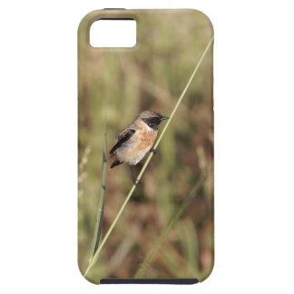 Common Stonechat (Saxicola torquatus) iPhone SE/5/5s Case