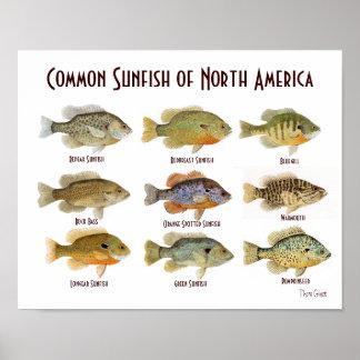 Common Sunfish Poster