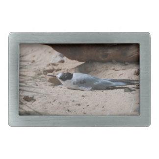 Common Tern Belt Buckle