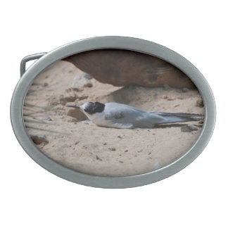Common Tern Oval Belt Buckle