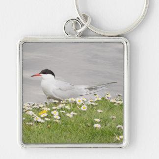 Common Tern Keychain