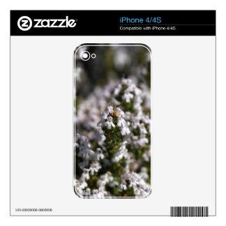Common thyme decal for the iPhone 4