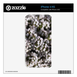 Common thyme decals for the iPhone 4
