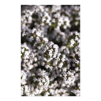 Common thyme stationery
