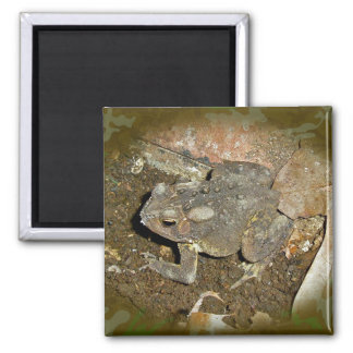 Common Toad Coordinating Items Magnet