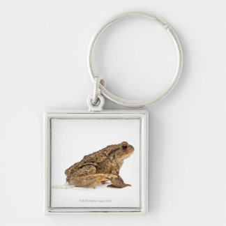 Common toad or European toad (Bufo bufo) pissing Keychains