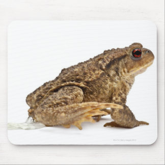 Common toad or European toad (Bufo bufo) pissing Mouse Pad
