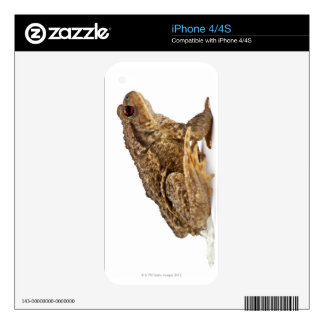 Common toad or European toad (Bufo bufo) pissing iPhone 4 Skin