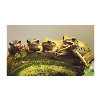 Common Tree Frog Polypedates Leucomystax Gallery Wrapped Canvas