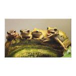 Common Tree Frog Polypedates Leucomystax Canvas Print