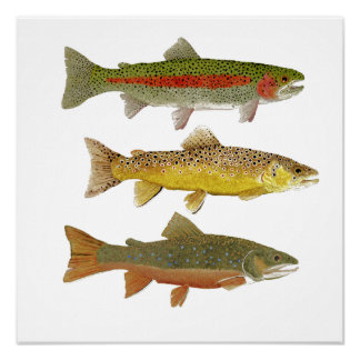 Common Trout Art Poster