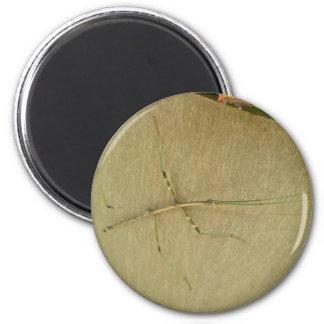 Common Walkingstick (Diapheromera femorata) Items Fridge Magnet