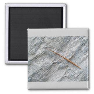 Common Walkingstick (Diapheromera femorata) Items Fridge Magnets