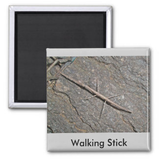 Common Walkingstick (Diapheromera femorata) Items Magnet