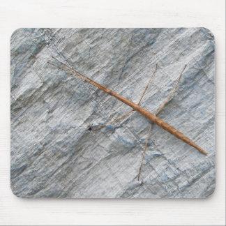 Common Walkingstick (Diapheromera femorata) Items Mouse Pad
