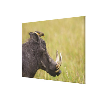 Common Warthog Phacochoerus africanus) with Canvas Print