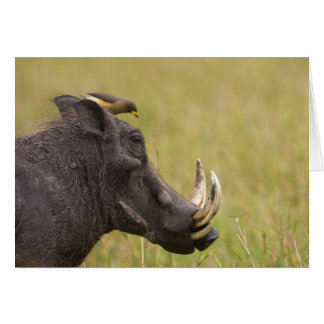 Common Warthog Phacochoerus africanus) with Card