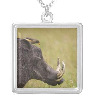Common Warthog Phacochoerus africanus) with Square Pendant Necklace