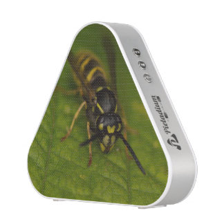 Common Wasp Speaker