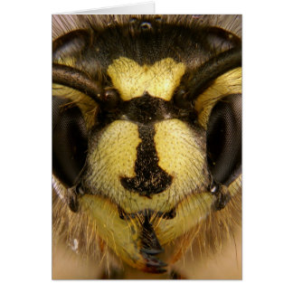 Common Wasp Vespula Vulgaris Card
