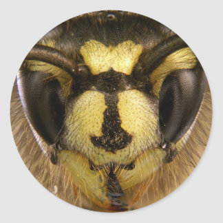 Common Wasp Vespula Vulgaris Classic Round Sticker