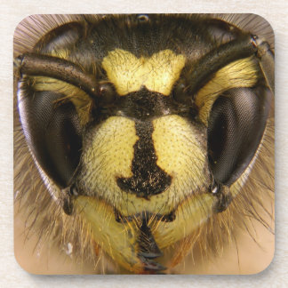 Common Wasp Vespula Vulgaris Drink Coaster